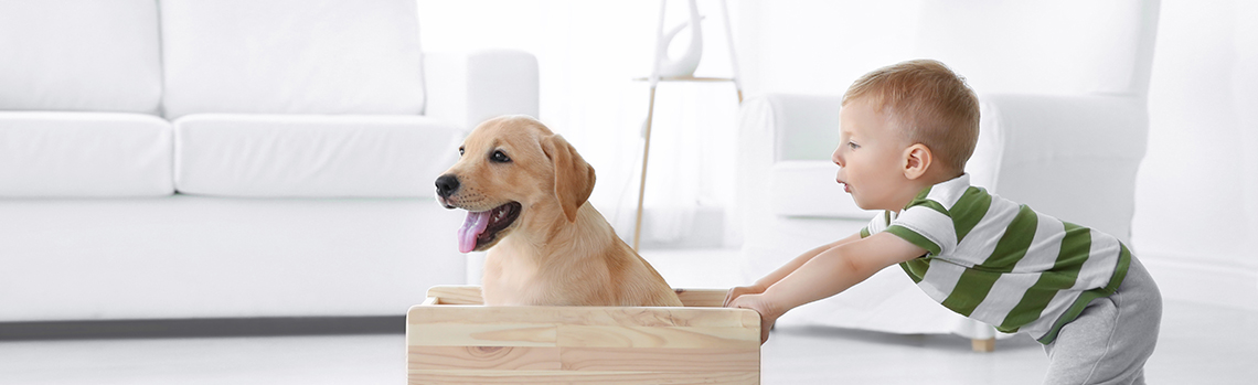Young boy pushing dog in a box around the living room